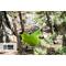 Гамак туристический повышенной прочности (Россия) ярко-зеленый от Магазин паракорда и фурнитуры Survival Market
